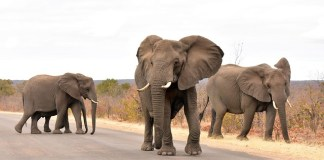 10 Adventurous must-see things to do in the Kruger National Park