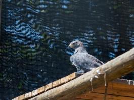 Crocworld birds enjoy new top-notch facilities