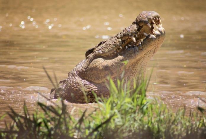 10 reasons you should visit Crocworld Conservation Centre on the KZN South Coast