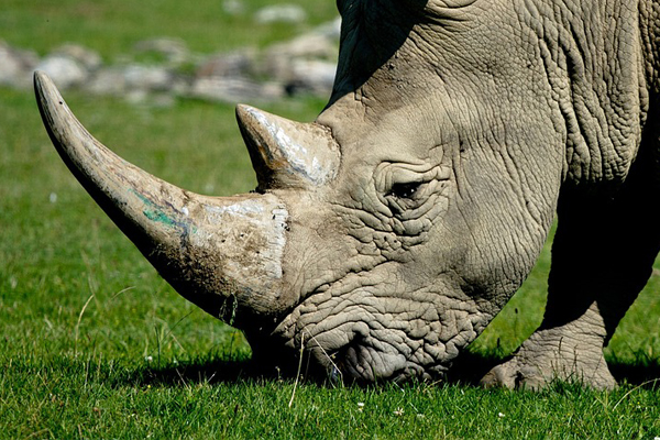 Manhunt for poachers after shootout, one killed
