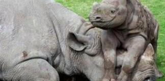 Three Bela Bela Rhino poachers sentenced