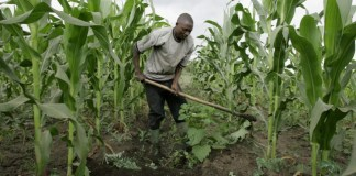 Kenyan B2B Agri-Tech Startup Taimba Gets $ 100K in Funding from Gray Matters Capital's coLABS