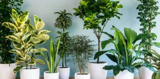 How to Grow a Healthy Indoor Garden: 5 Pro Tips