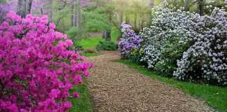 Spring Gardening: 6 Things You Can Do to Prepare for Spring