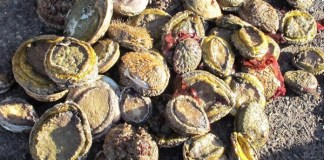 Racketeering, corruption and dealing in abalone, accused sentenced, CT