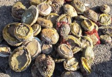 Over R2,7 million worth of abalone seized, Cape Town