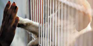 The state of animal rights law in South Africa - What is the situation during COVID?