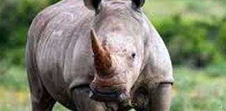 Policeman injured in shootout with rhino poachers, Vredefort