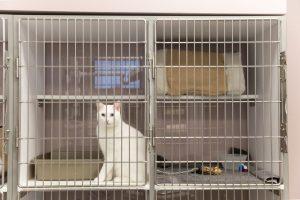 A cat comfortably awaits treatment at the South Austin Cat Hospital.