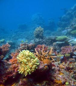 Pretty coral formations growing underwater on a shallow offshore reef in the Fijian islands