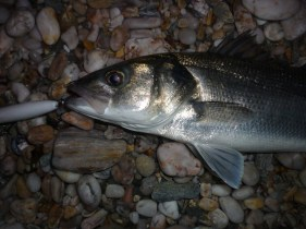 Bass caught at night on white lures