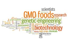 Genetically Modified food (GMO crops)