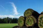 Rolls of fresh grass turf