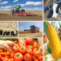 Agriculture - collage2