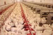 Georgia poultry price index