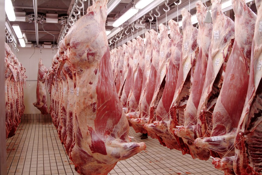 red meat production