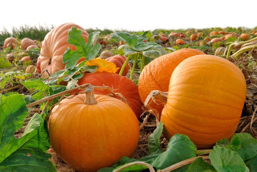 Autumn Vegetable Planting Southeast Agnet