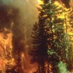 wildfire-forest