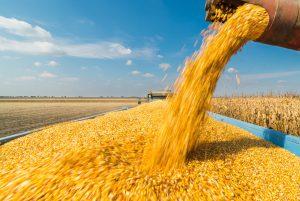 corn soybean stocks