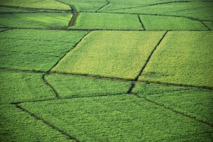 crop insurasnce
