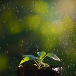 green-sprouts-in-the-rain