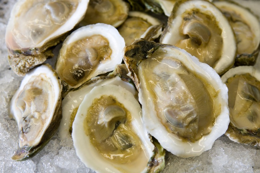 Raw oysters on ice. Oyster