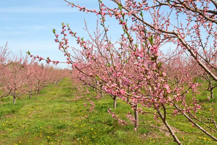 spring crop damage