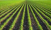 soybean acres