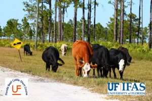 66th Annual Florida Beef Cattle Short Course