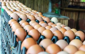 may egg