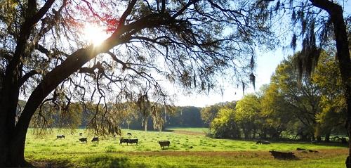 2017-2018 Florida Heifer Development Program