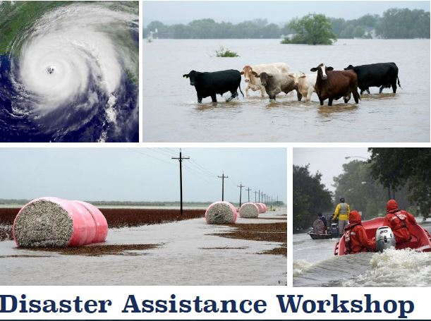 usda disaster assistance