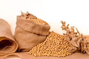 soybean prices