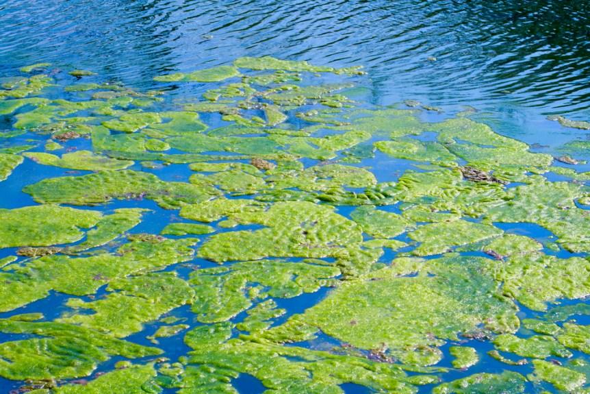 algae task force