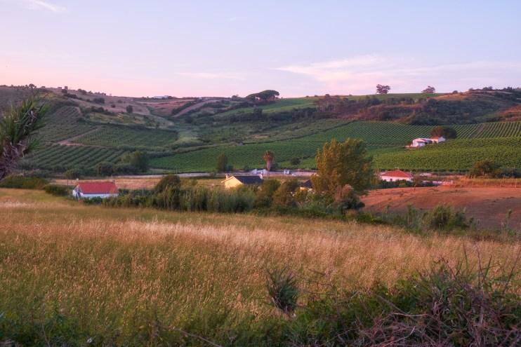 rural population