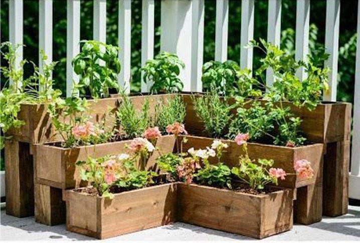 reasons herb garden
