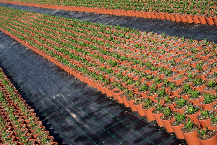 specialty crop farmers