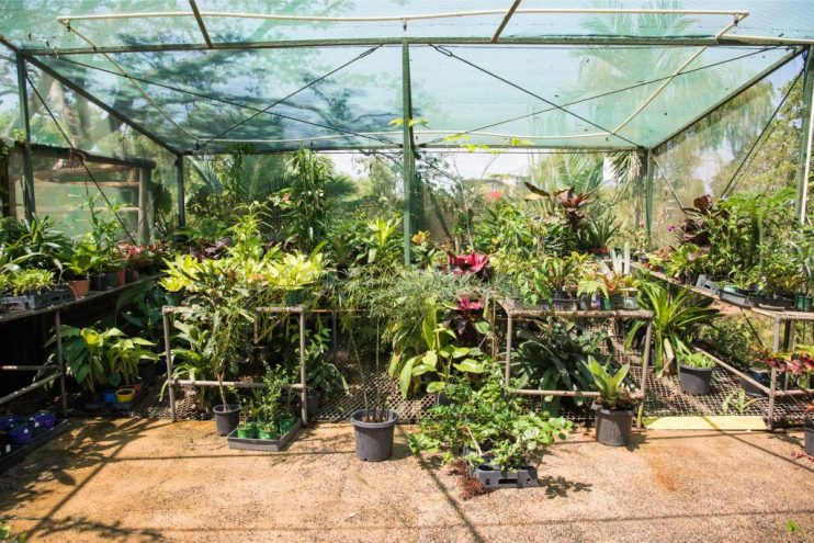 greenhouse space