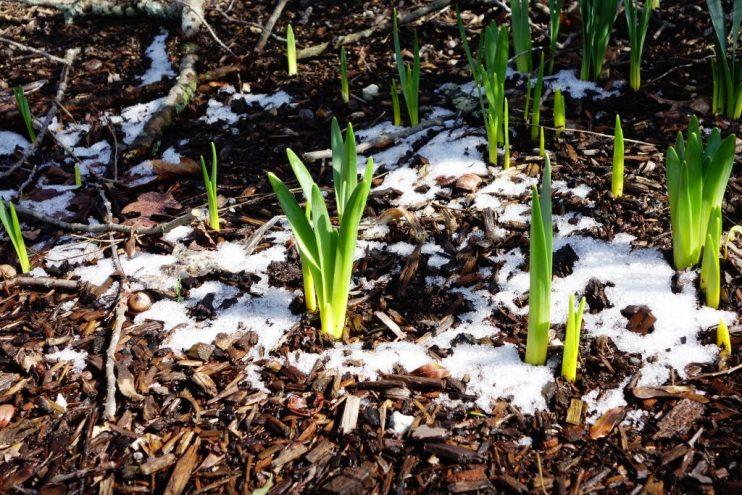 winter mulching