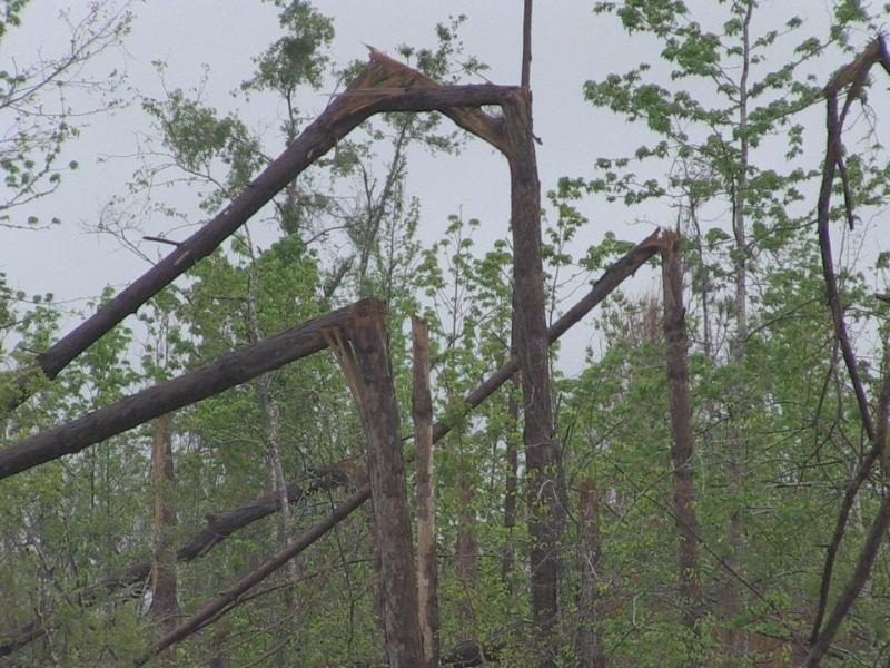 florida timber