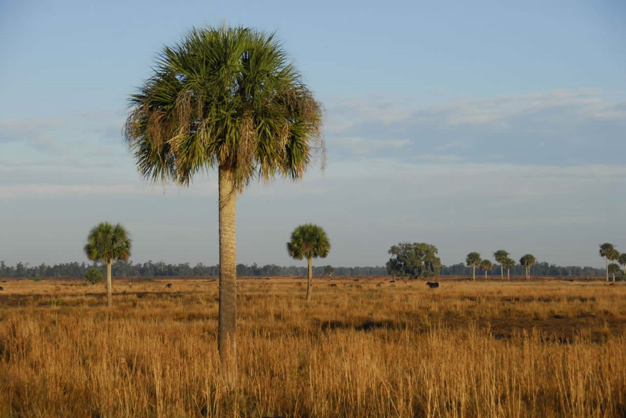 Grant Looks at Mitigating Climate Change Impacts on Florida Grasslands - - Southeast AgNet