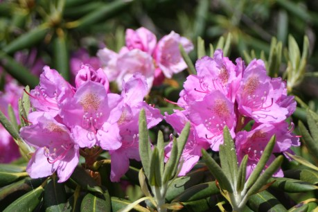 Roll and Stroll in the Rhodendron Gardens