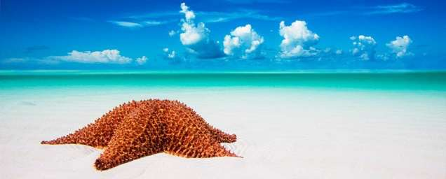 "Part of ""The Shallows"" collection, the lone star on a majestic looking white sandy beach."
