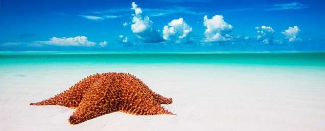 """Part of """"The Shallows"""" collection, the lone star on a majestic looking white sandy beach."""