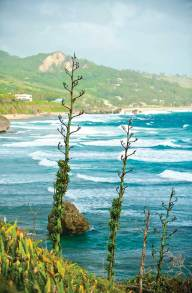 Cattlewash Beach. The wild east coast of Barbados north of the village of Bathsheba is a long stretch of sand where the 'white horses' - thundering Atlantic waves - finally hit land after traveling all the way from Africa.