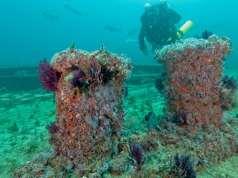 Artificial Reef