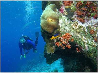Dive Site in Bonaire