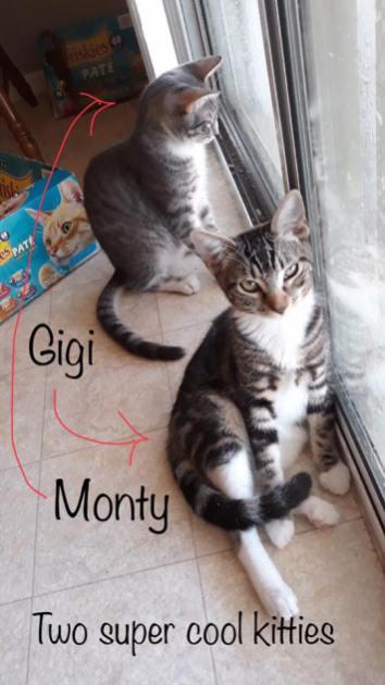 gigimonty