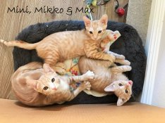 mini mikko and max