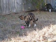 Shelby playing with a pink tennis ball